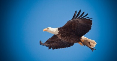 Eagles in the Bible